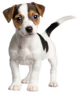 Dog Food Reviews Puppy